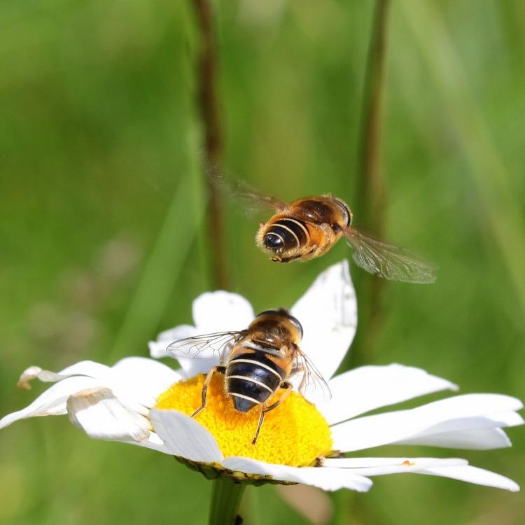 Centrum Černý Most podporuje včelařství