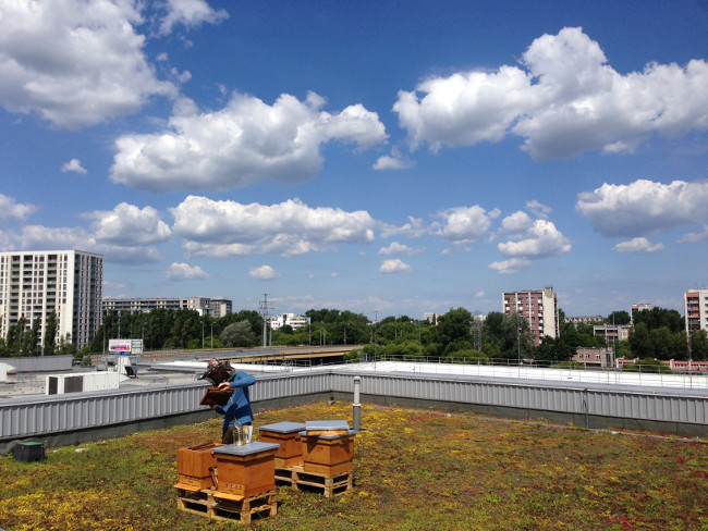 Ule na dachu Arkadii